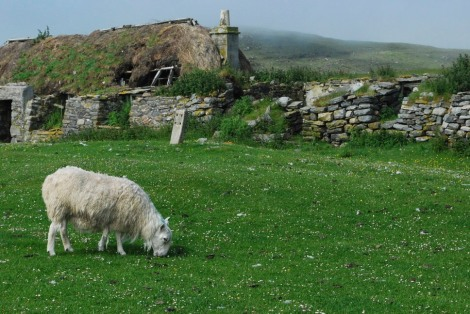 Black house ruins (and a sheep), Berneray
