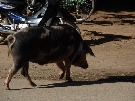 And then a pig saunters across the road.