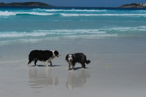 Wharton Beach (and a couple of wet dogs)