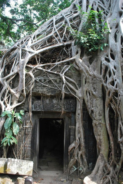 Trees and temples as one at Ta Prohm