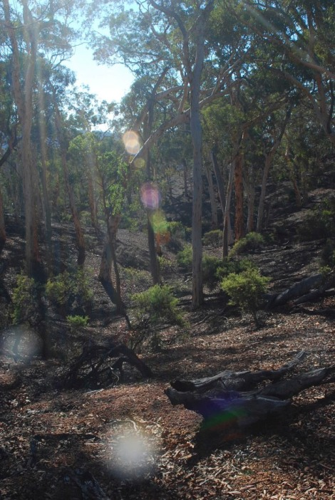 Sunlight and gumtrees