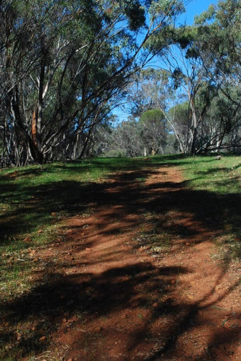 The shady path