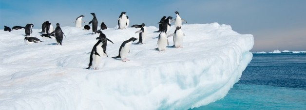 Look how much fun these penguins are having. You know why? Because they're NOT HOT!
