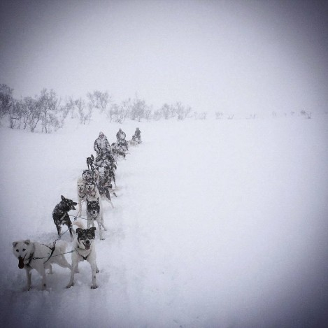 Dogsledding in Tromso (Photo by Kaine Williams)
